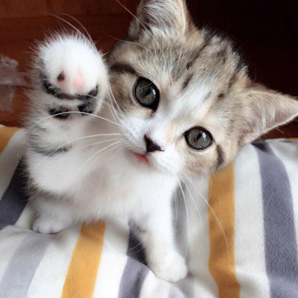 Gimme That Paw