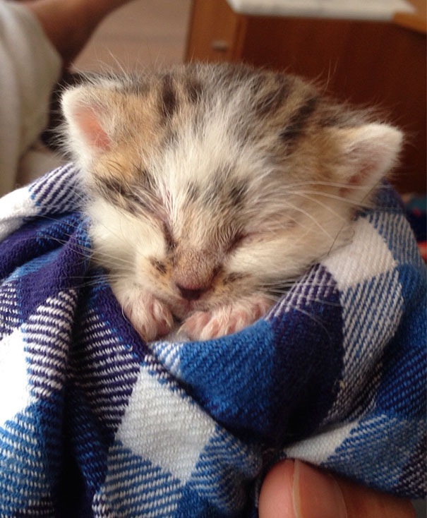 We Found This Fluffy Cat Crying All Alone In The Grass. He Was Only Two Weeks Old And Malnourished. This Was Taken After We Removed All The Ticks And Fleas And Gave Him A Bath